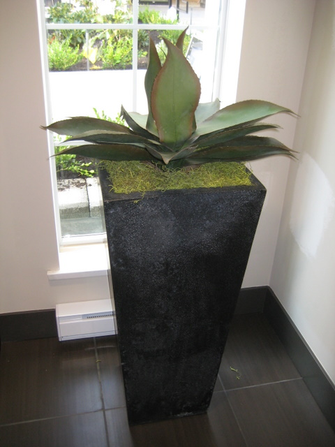 Artificial Agave in Highstreet Showroom